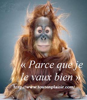 www.toutenplaisir.com   www.tchat.toutenplaisir.com  www.blog.toutenplaisir.com (3)